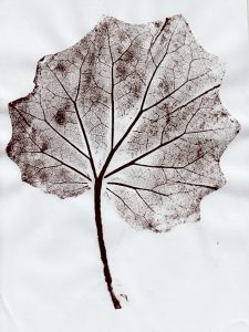 leaf printed image